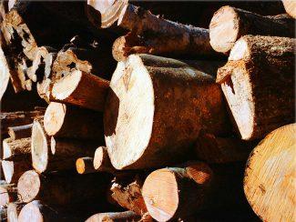 群馬の材木